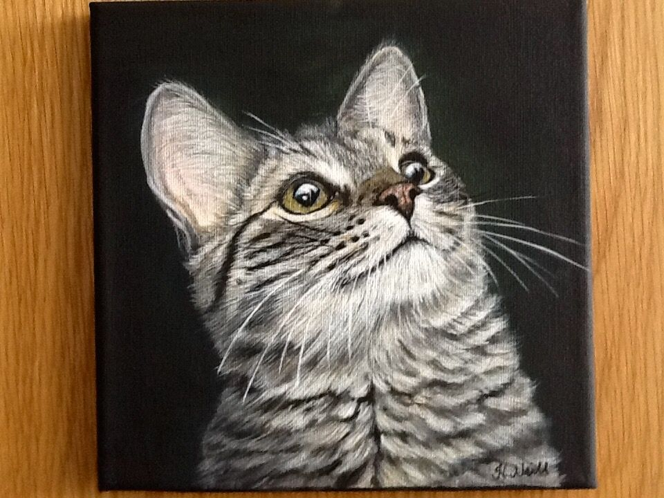 Pin by Heather Neill Artist on Purrfect Portraits By