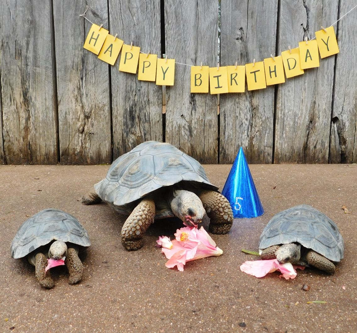 Taronga Zoo Christmas Party: Ain't No Party Like A Tortoise Party! Australasia's First