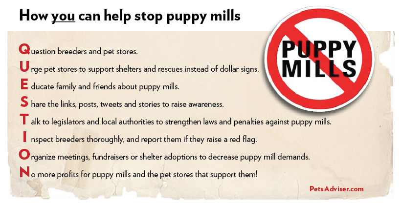 Who here has a dog or a Puppy Mills