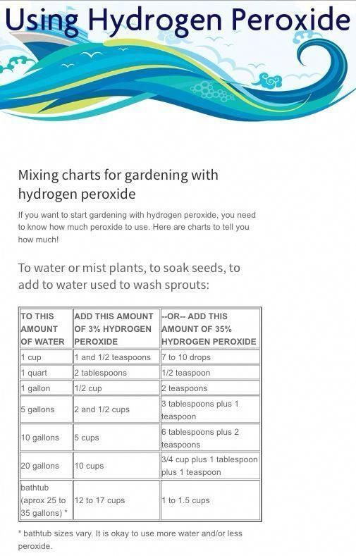 Hydrogen Peroxide for Fungus Gnats | Hydrogen Peroxide mixing chart for WATERING OR MISTING PLANTS, SOAKING ... #gardeningfungus #gnats Hydrogen Peroxide for Fungus Gnats | Hydrogen Peroxide mixing chart for WATERING OR MISTING PLANTS, SOAKING ... #gardeningfungus #gnats Hydrogen Peroxide for Fungus Gnats | Hydrogen Peroxide mixing chart for WATERING OR MISTING PLANTS, SOAKING ... #gardeningfungus #gnats Hydrogen Peroxide for Fungus Gnats | Hydrogen Peroxide mixing chart for WATERING OR MISTING #gnats