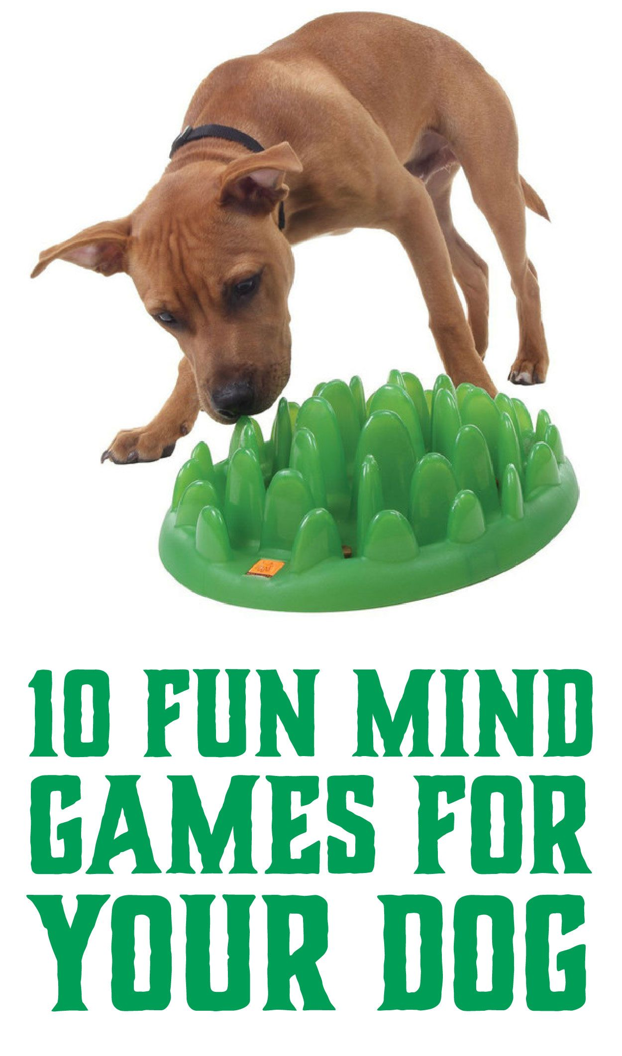 10 Fun Mind Games For Your Dog Fun Mind Games Puppies Dog Games