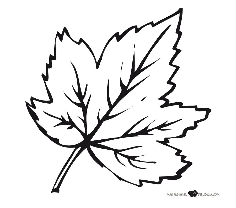 Hoja arbol platanero - Dibujalia - Dibujos para colorear ...