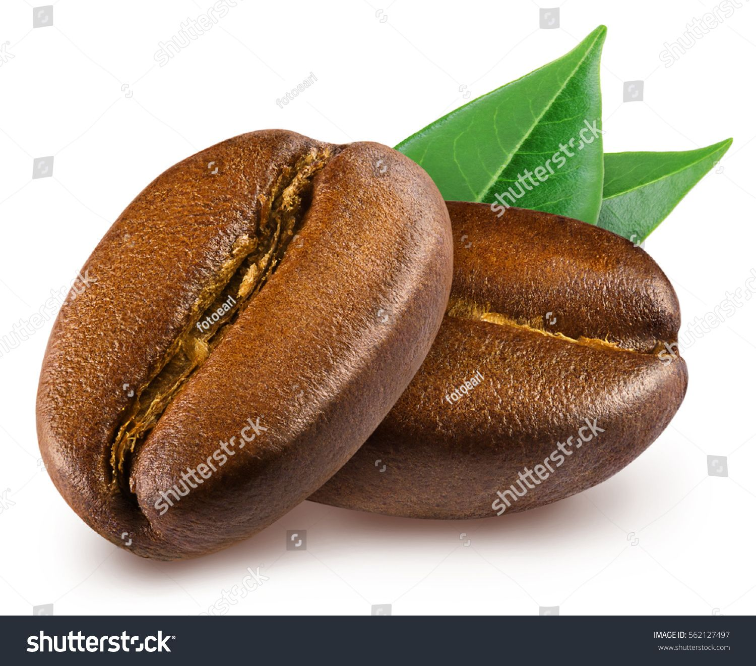 Two shiny fresh roasted coffee beans with leaves isolated