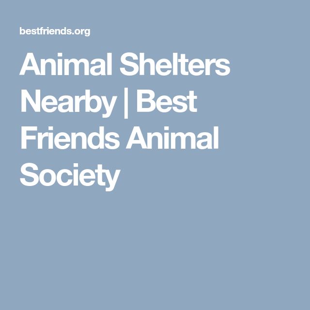 Network Partners Animal Society Animal Shelter Humane Education