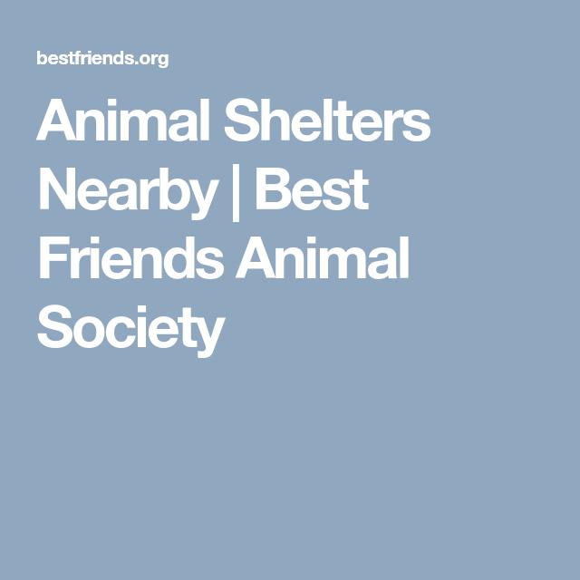 Network Partners Animal Society Animal Shelter Humane Education