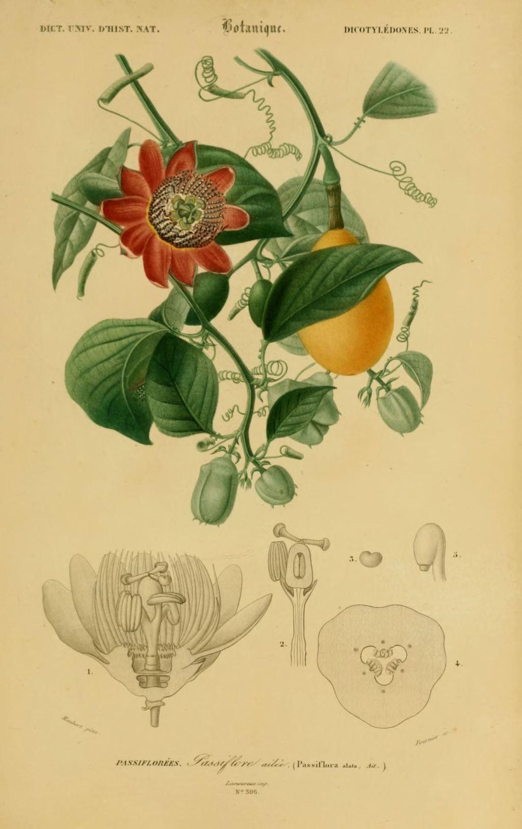 Fleur En Dessin Couleur