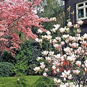 Photo of House trees for small gardens – House trees for small gardens – #cottagegard …