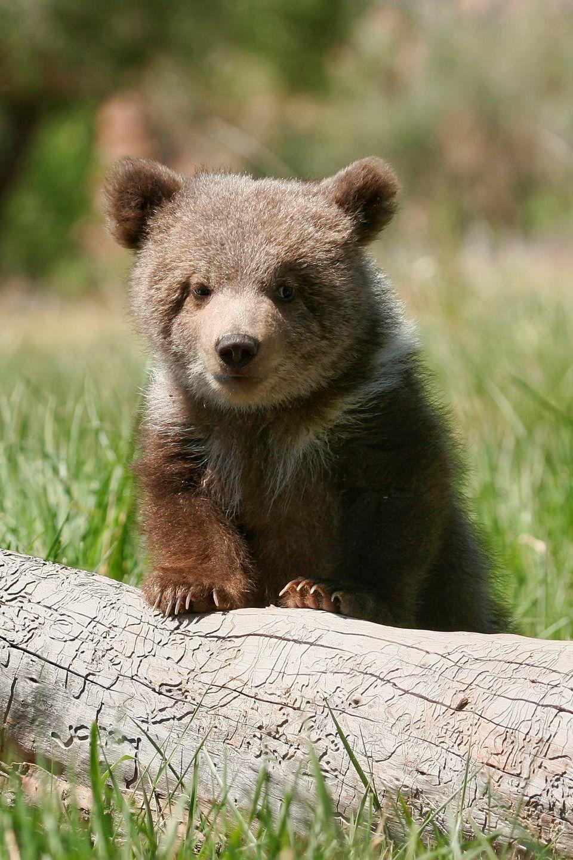 Pin on Noah's Ark Cute Baby Animals!!