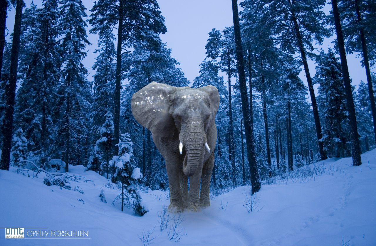 Animal Electrocuted Porn could elephants adapt to snow? | elephants! | mindfulness
