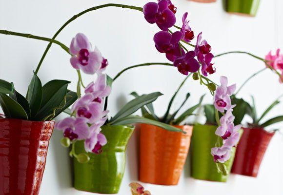 Cuidados de verano para plantas de interior plantas for Plantas decorativas de interior