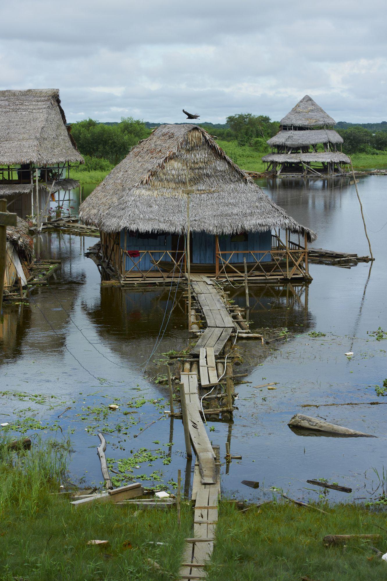 Photos Of The Week The Peruvian Amazon Amazon Rainforest