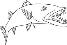 How To Draw Barracuda Fish Coloring Pages Best Place To Color Fish Coloring Page Coloring Pages Drawings