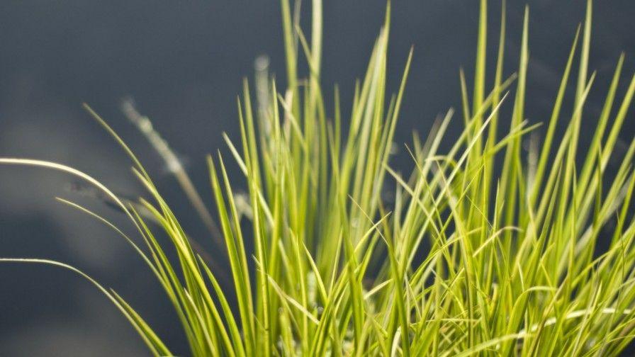 Grass 49