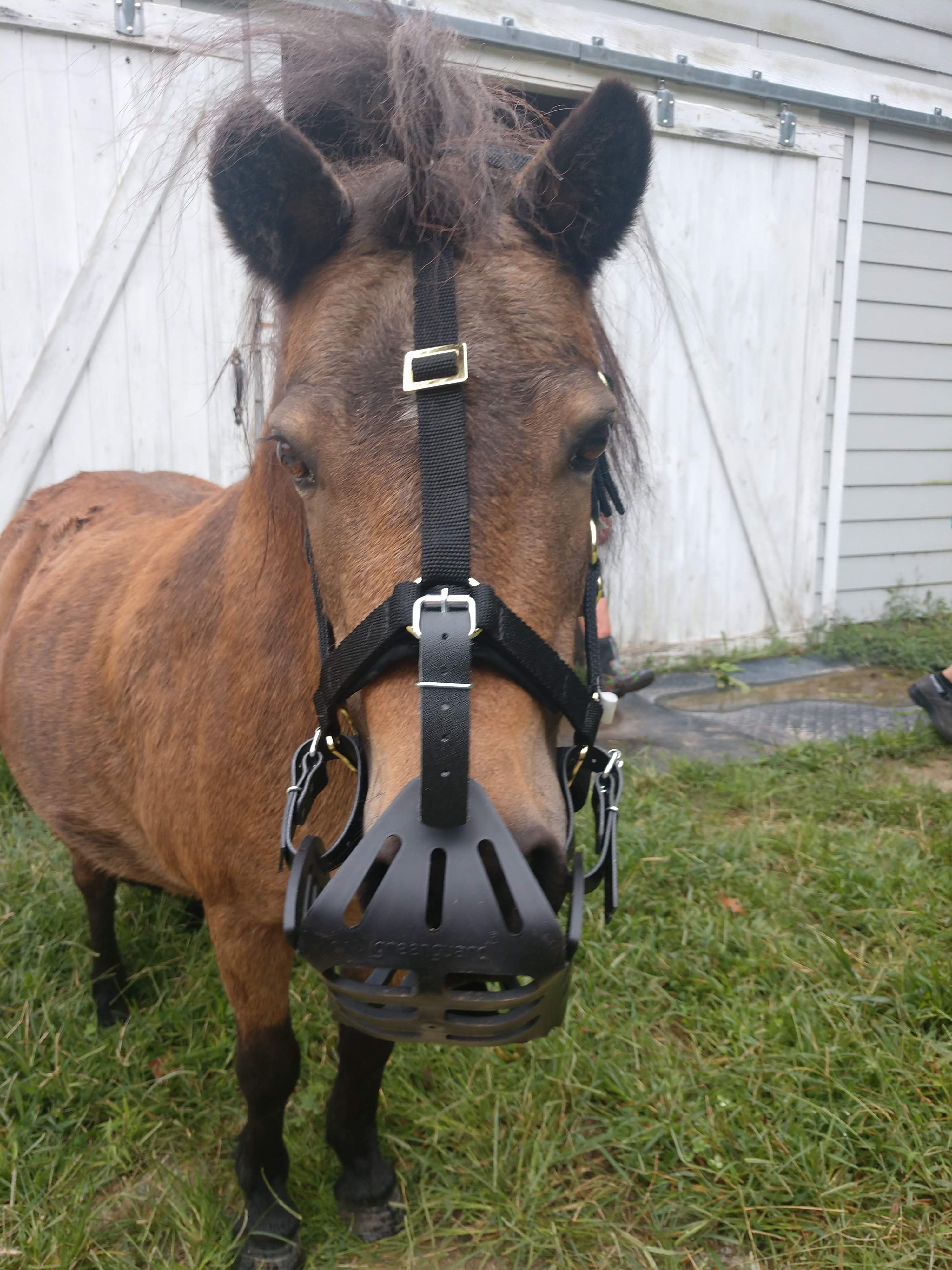 We Are Grateful When Equine Vets And Other Horse Health Professionals Recommend Greenguard S Grazing Muzzles Thanks To Tillotso Horse Health Equines Endocrine