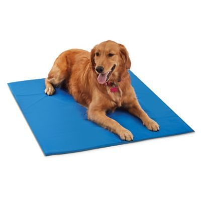 Pawslife Medium Cool Pet Pad In Blue Cool Pets Cool Dog Beds