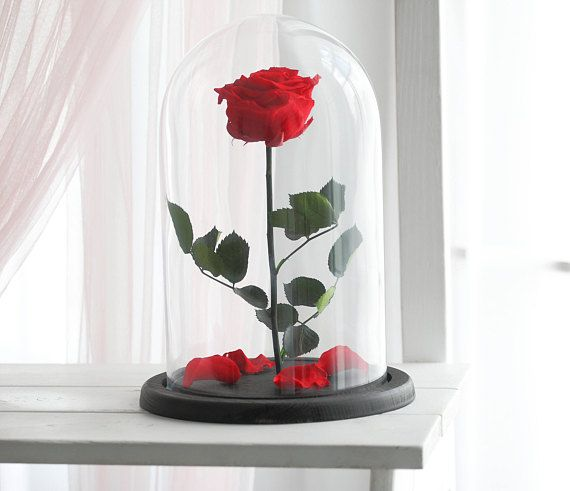 Beauty And The Beast Rose Large Forever Rose Enchanted Rose