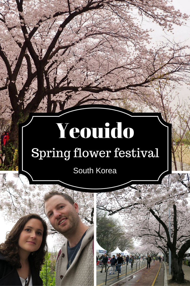 The Beautiful Cherry Blossom Festival In Yeuido South Korea Flower Festival Spring Flowers Cherry Blossom Festival