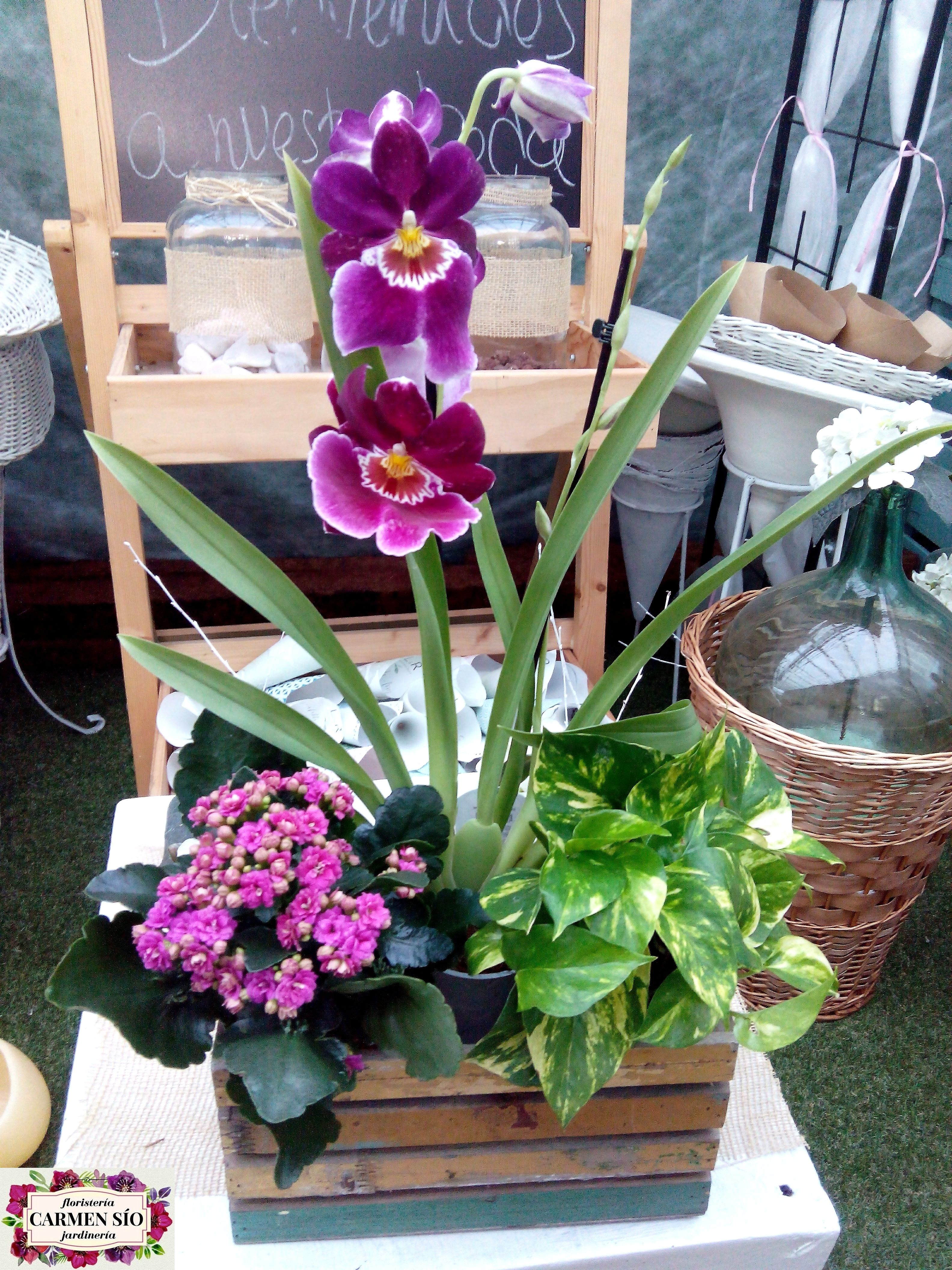 Cesta Para Regalo Con Orquideas Kalanchoe Y Photos Pop Up Store Plants Pop Up