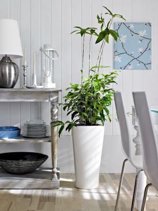 Grünpflanzen für jeden Wohnstil Pflanze, Wohnzimmer pflanzen und - moderne wohnzimmer pflanzen