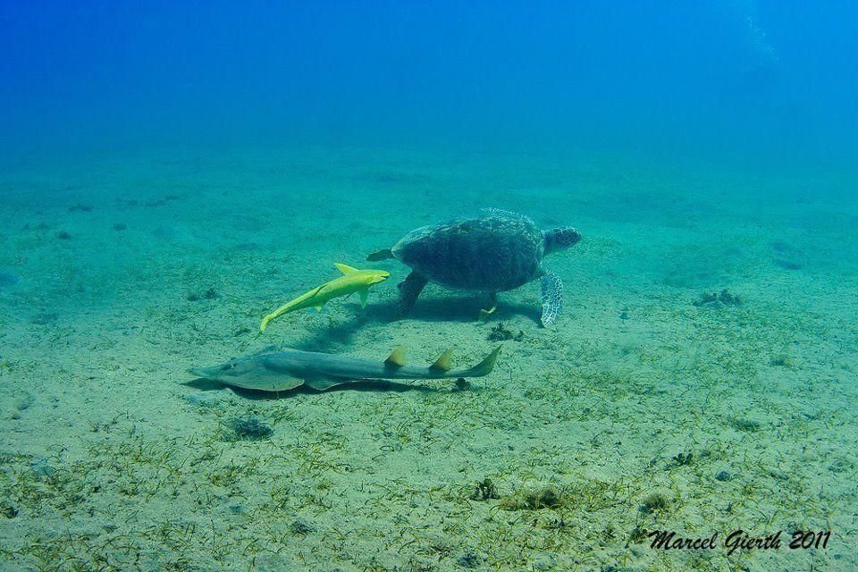 1) Sea Research Society (shipwrecks, underwater archaeology, marine - marine biologist job description