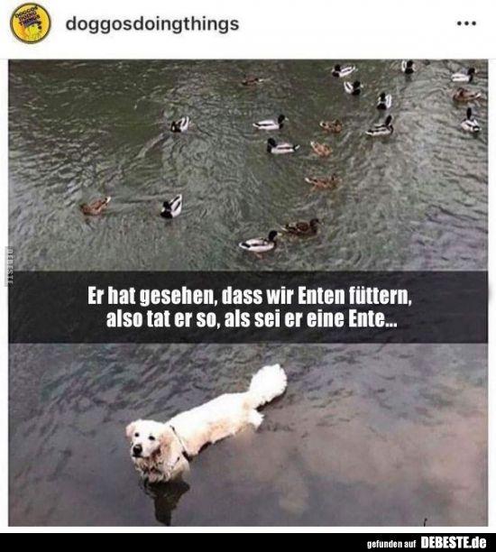 Photo of Nos vio alimentando patos, así que fingió estar … | Fotos divertidas,…