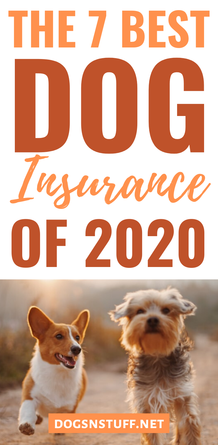 How To Find The Best Dog Insurance In 2020 With Images Dog