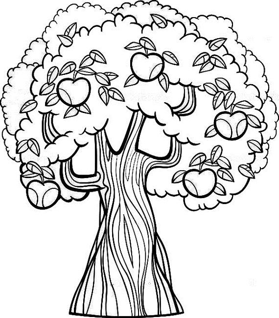 Fruit Tree Coloring Page Tree Coloring Page Mandala Coloring