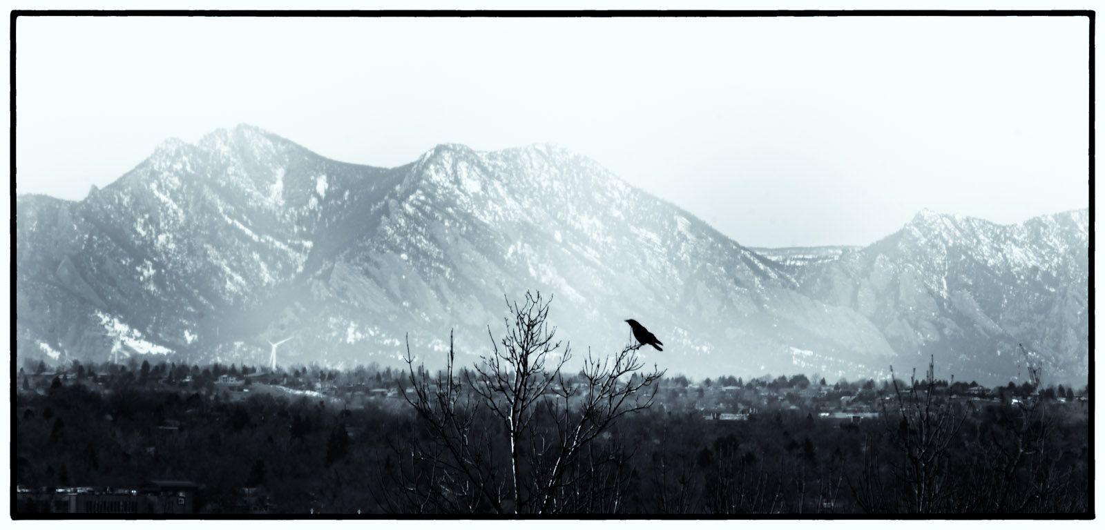 Kindred Spirit. Shot yesterday in Denver,Co Kindred