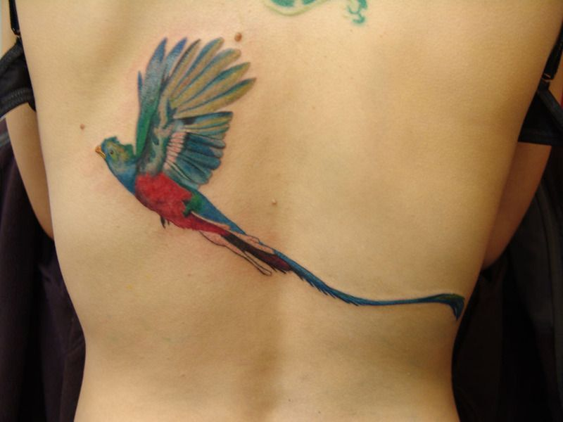 Quetzal Bird Tattoo Tattoo Pictures At Checkoutmyink Com Back Tattoo Shoulder Tattoo Tattoos