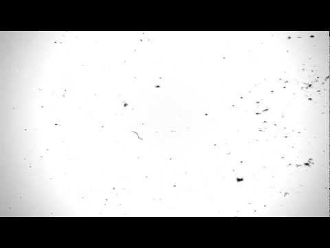 Free Video Overlay Film Damage Effekt For Your Video Projekt No Grain Youtube Overlays Vintage Film Abstract Artwork