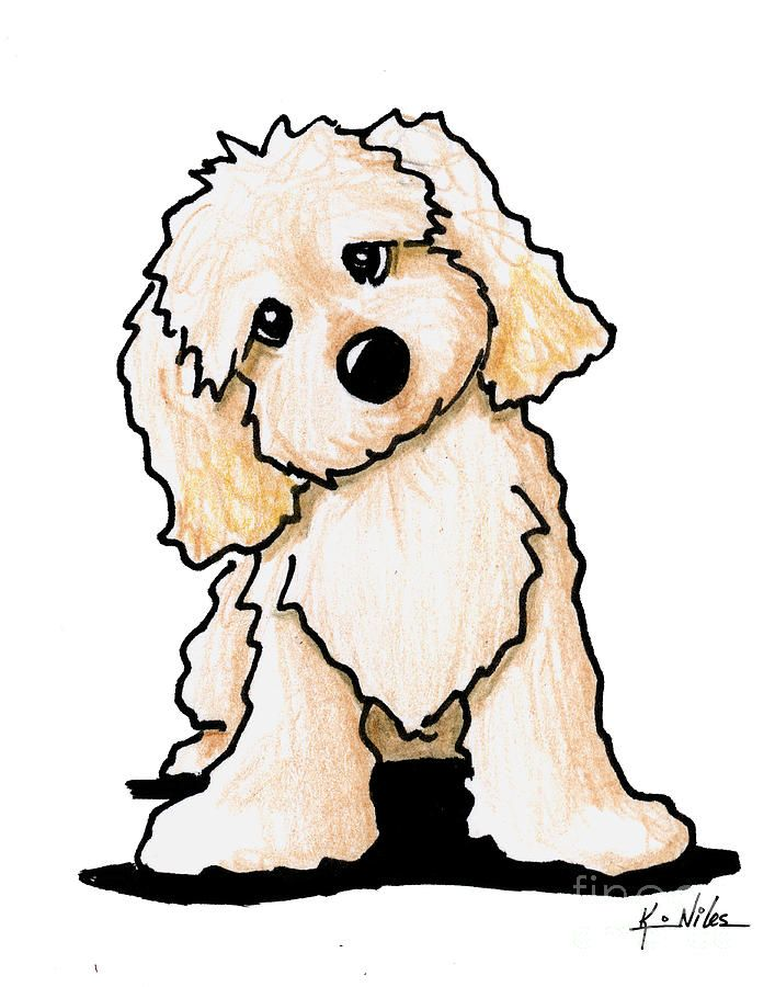 Curious Cute By Kim Niles In 2020 Poodle Drawing Puppy Drawing