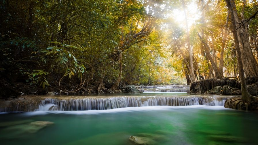 latest jungle river free download hd wallpapers Hd wallpaper