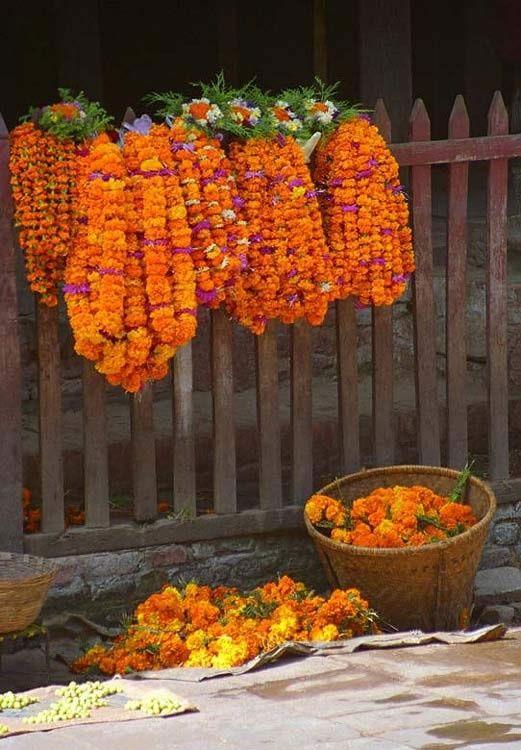 Marigolds, Kathmandu, Nepal