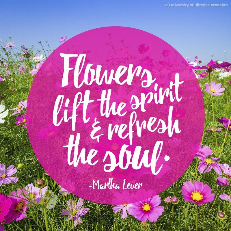 Flower Garden Quote