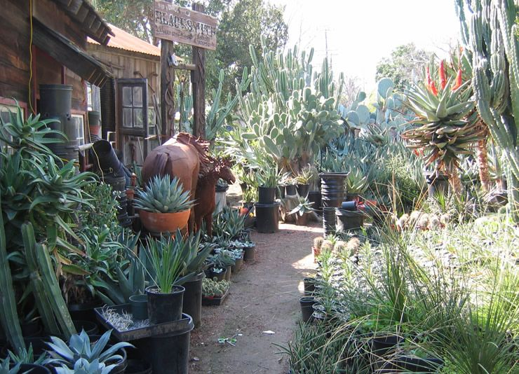 California Nursery Specialties San Fernando Valley Cacti And Succulents