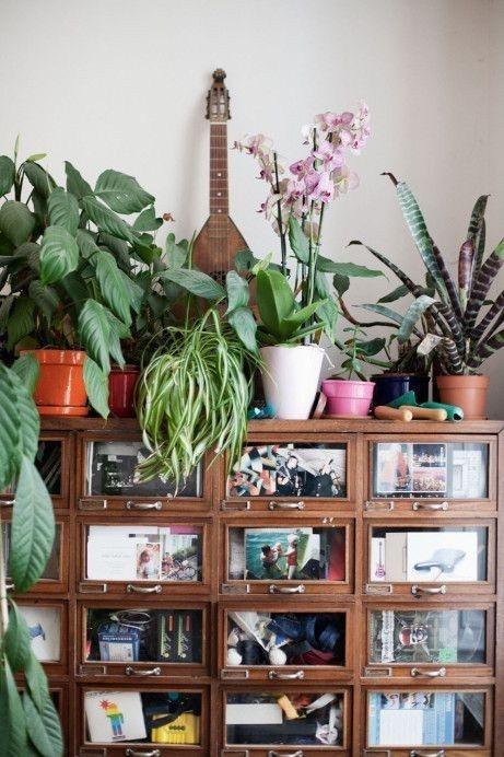mi casa mi selva ideas para decorar con plantas de interior