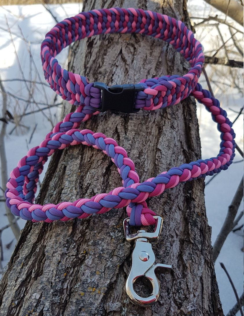 Paracord Leash And Collar Set 550 Paracord Quad Colored