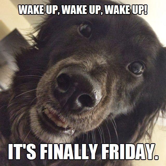 030944d3738cd13633bd51457569d237 wake up! it's finally friday meme puppy dog animals