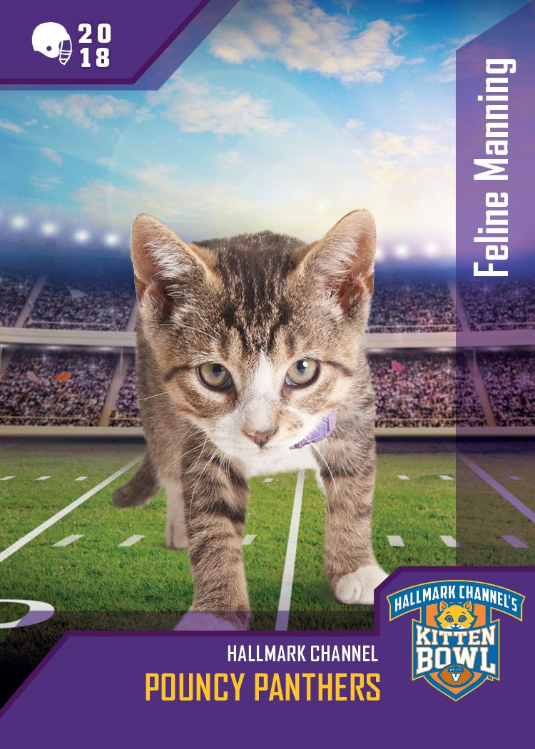 Kitten Bowl V Feline Manning Has Got Eyes Only For The Ball Will The Pouncy Panthers Take Down The Little Longtails Fin Kitten Bowls Kittens Kittens Cutest