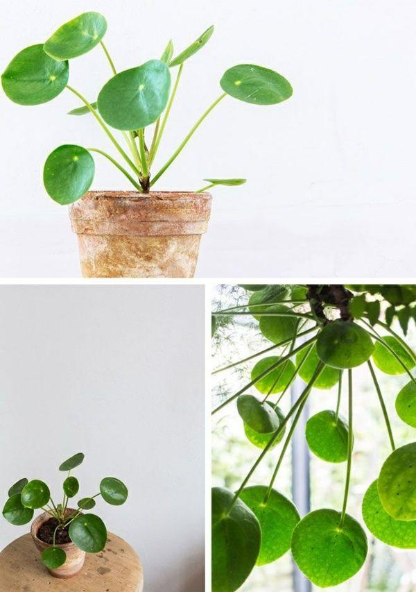 Zimmerpflanzen pflegeleicht topfpflanzen gl ckstaler for Zimmerpflanzen wohnzimmer
