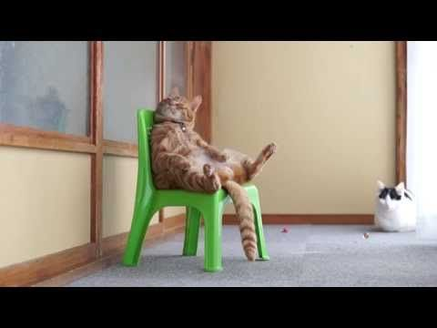 this two minute video of a cat just sitting in a chair is perfect in rh pinterest com