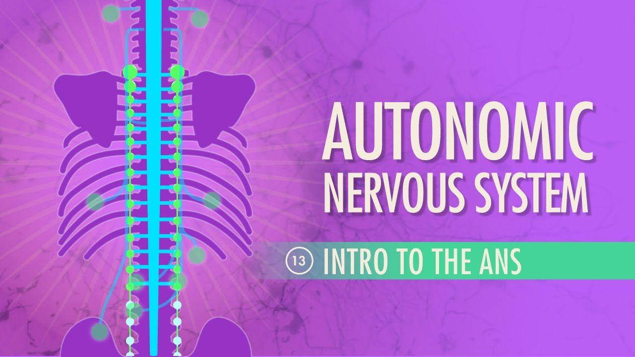 Autonomic Nervous System: Crash Course A&P #13 | BIO.1141 Anatomy ...