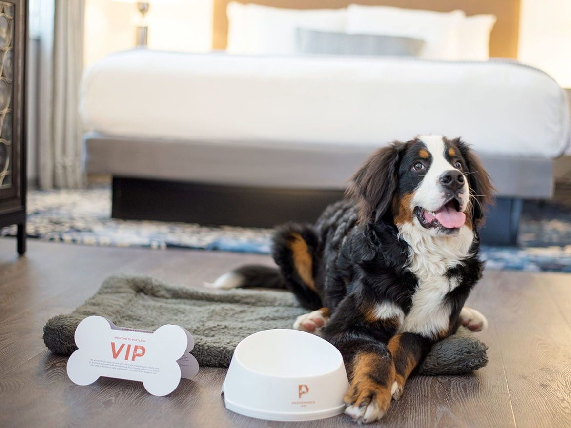 check in to one of these 10 poshpet friendly hotels iconic pet rh pinterest com