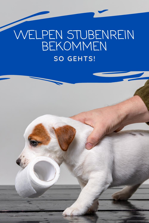 Welpen Stubenrein Bekommen Hundeblog Meinhund24 Welpe Stubenrein Welpen Hunde Welpen Erziehung