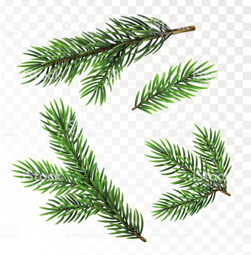 Fir Tree Branches Isolated On Transparant Background Christmas Christmas Tree Drawing Tree Drawing Tree Branches