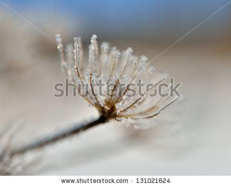 Ice Flake kuvitusvalokuvat | Shutterstock
