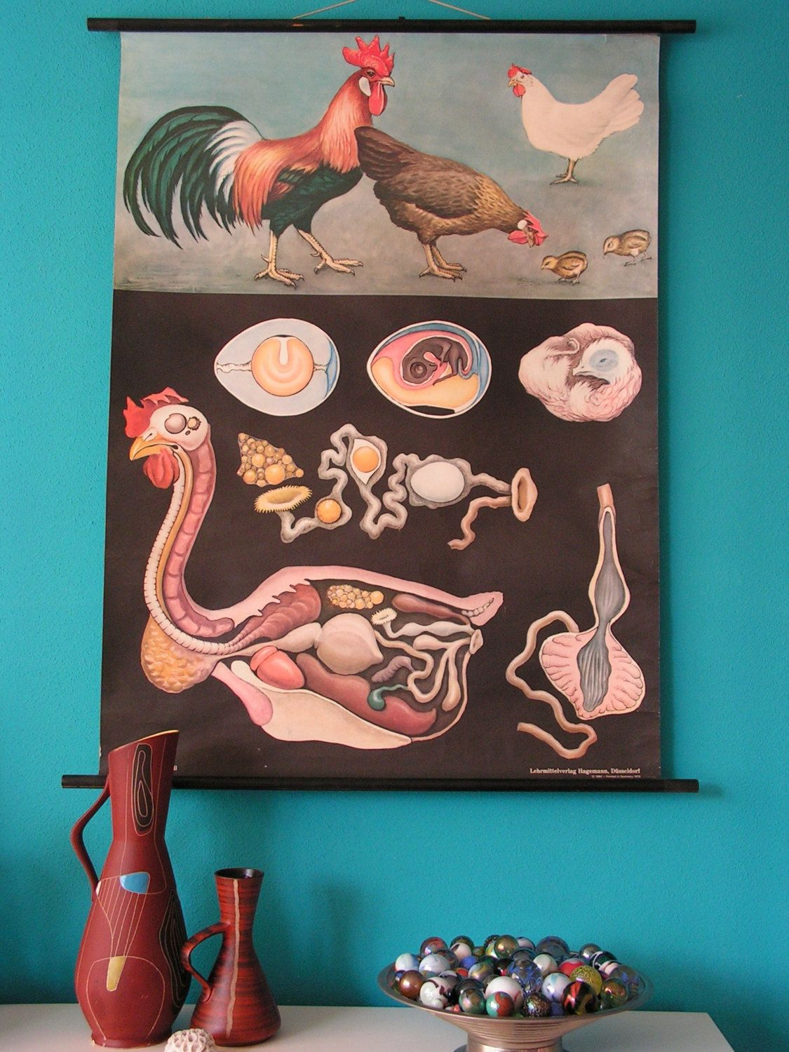 Vintage German Pull Down School Chart, Poster Zoology Print, Rooster ...