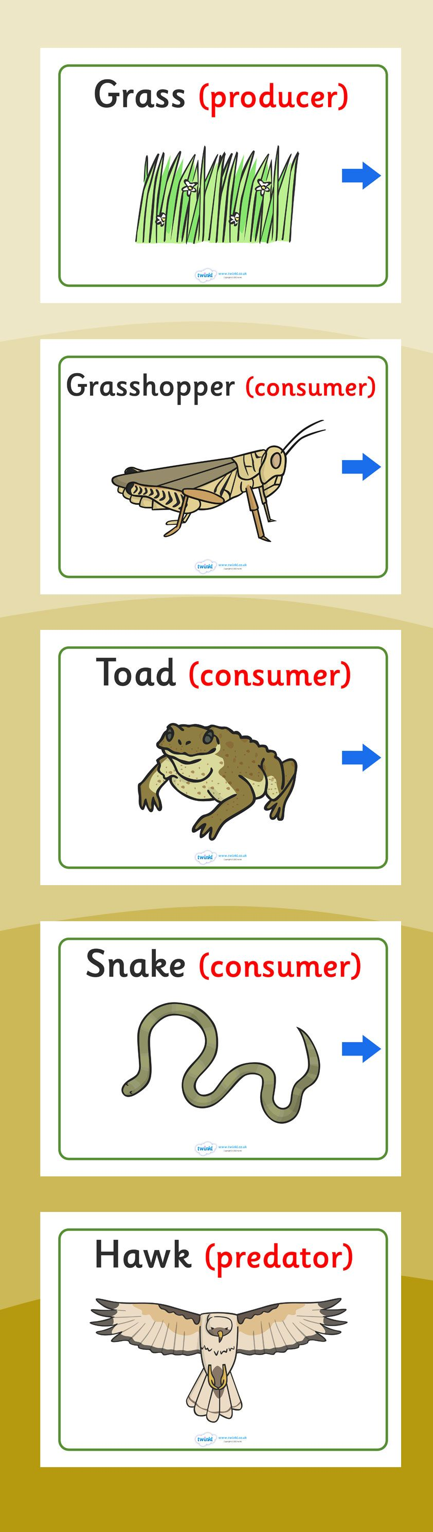 Food Chain Display Posters Food Chain 4th Grade Science Teaching Science