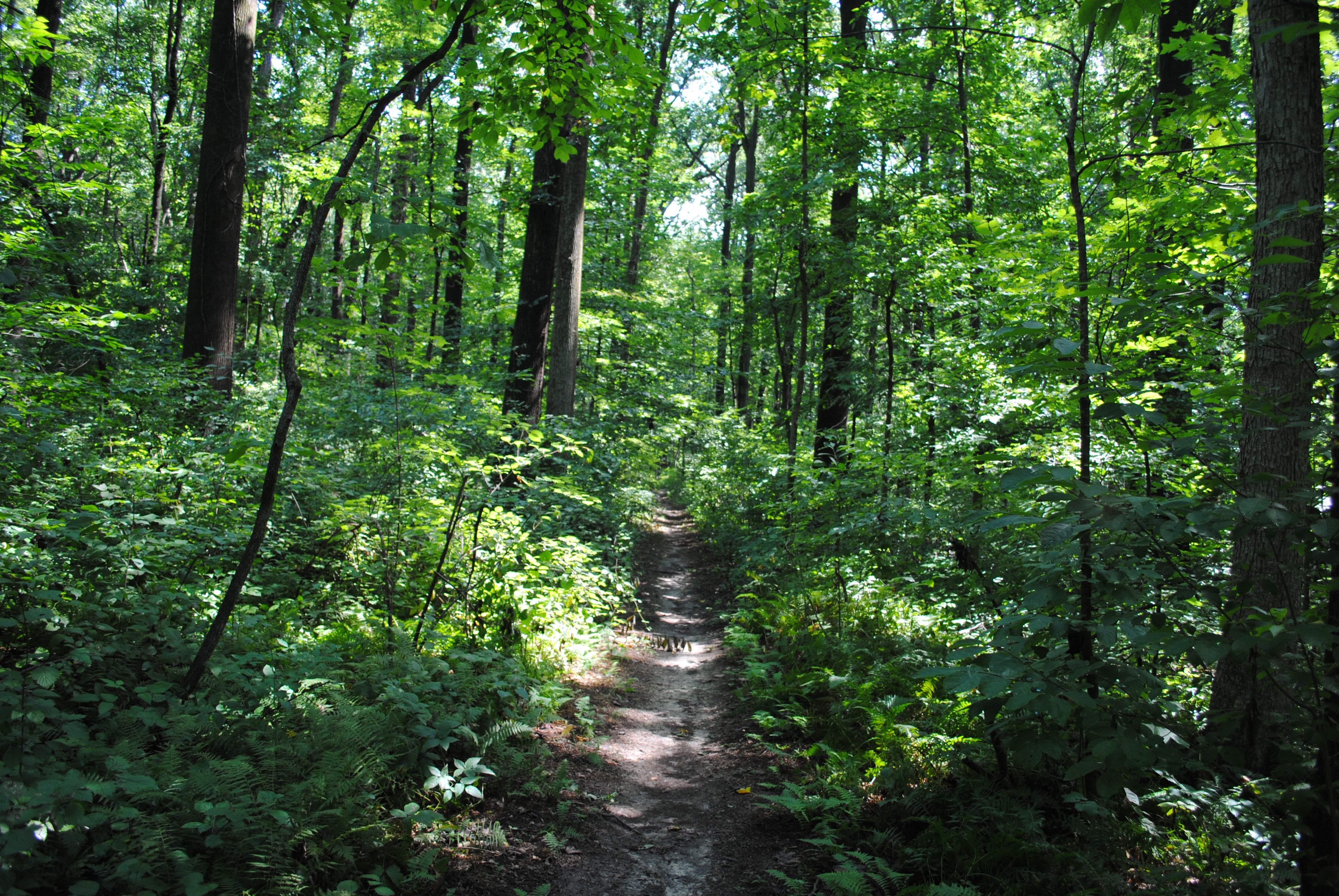 A very narrow path in Sadsbury Woods Preserve of the Natural Lands
