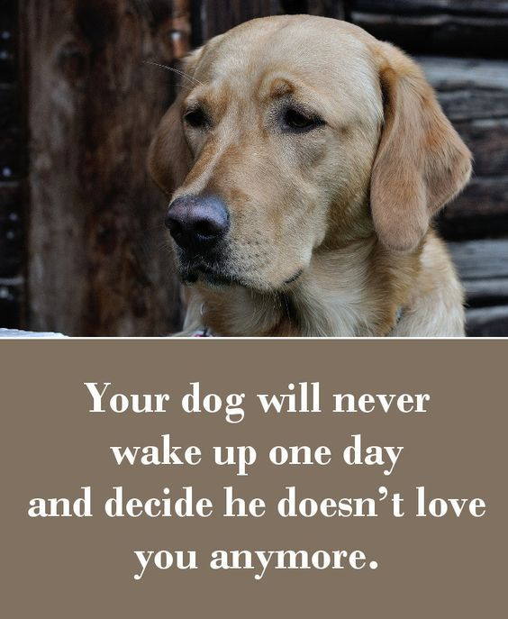 your dog will never wake up one day and decide he doesn t love you